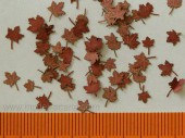 L3-201 Maple - dry leaves