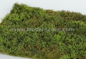 F571 Wild area with bushes - Spring